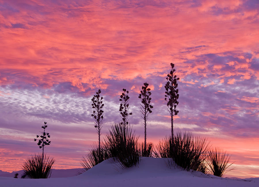 Tranquility Photograph - Yucca At Sunset In White Sands National by Russell Burden