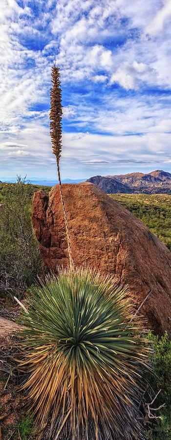 Yucca Bloom by Rick Furmanek
