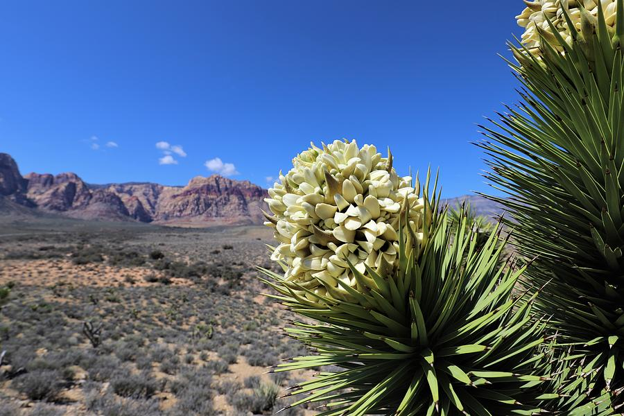 Yucca Brevifolia by Sagittarius Viking