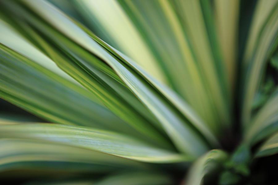 Yucca Plant Macro Photograph by Davealan