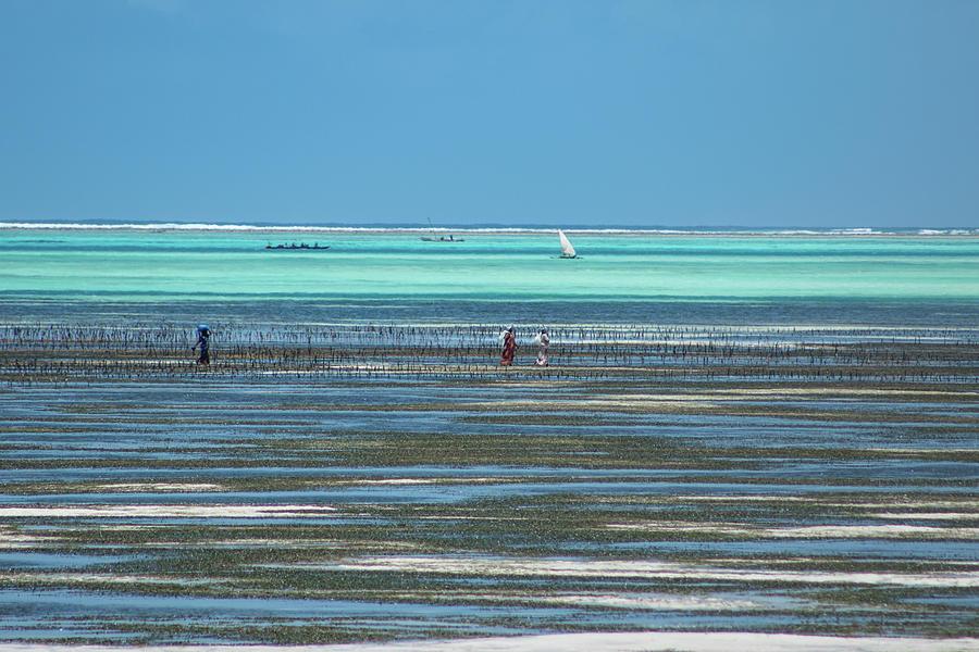 Zanzibar diptic 1 by Mache Del Campo