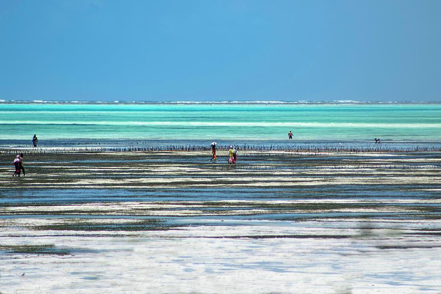 Zanzibar SEa weed collectors 2 by Mache Del Campo