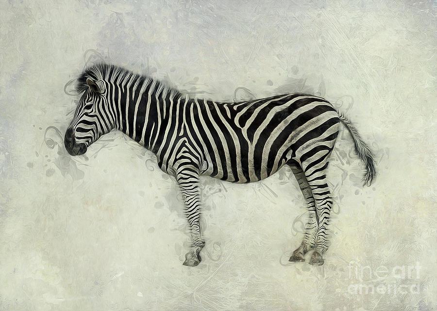 Zebra Art by Ian Mitchell