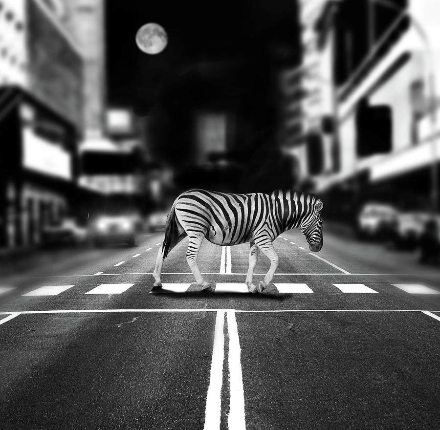 Zebra Crossing Photograph by By Sigi Kolbe