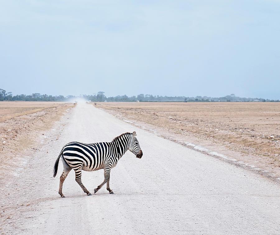 Zebra Crossing Photograph by Georgeclerk