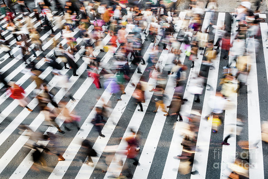 Zebra Crossing Photograph by Tomml