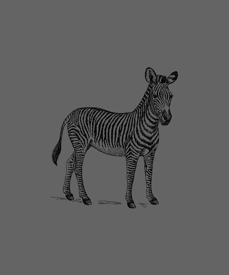 Zebra by Dawn OConnor