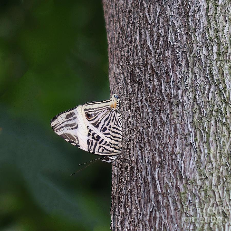 Zebra Mosaic Butterfly by Ann Horn