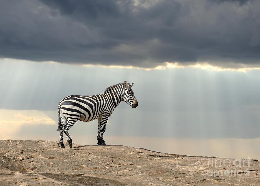 Game Photograph - Zebra On Stone In Africa, National Park by Volodymyr Burdiak