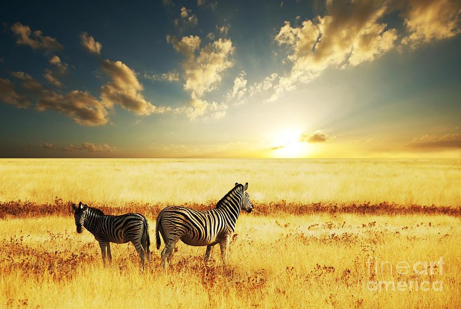 Zebra Photograph - Zebras At Sunset by Galyna Andrushko