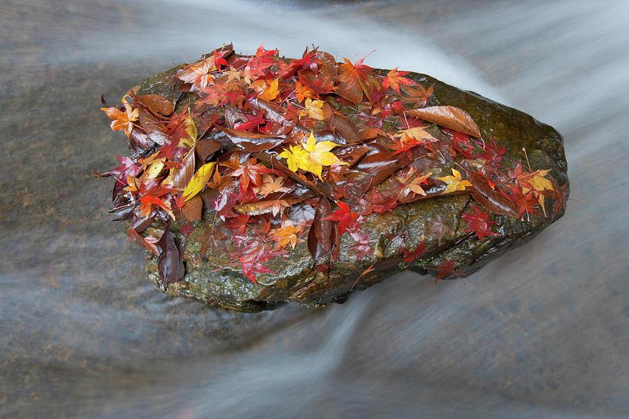 Zen Garden At Eikan-do Temple In Kyoto Photograph by B. Tanaka