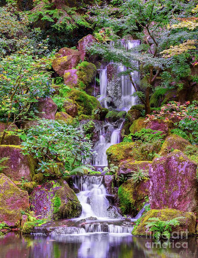 Zen Garden by DHEERAJ MUTHA
