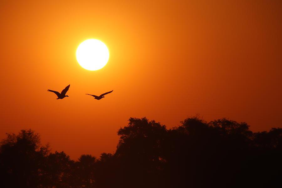 Zimbabwe Sunset by Pat Moore