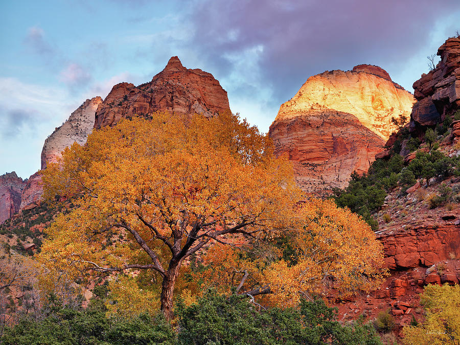 Autumn Photograph - Zion Cliffs Autumn by Leland D Howard