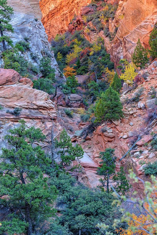 Zion Color Photograph