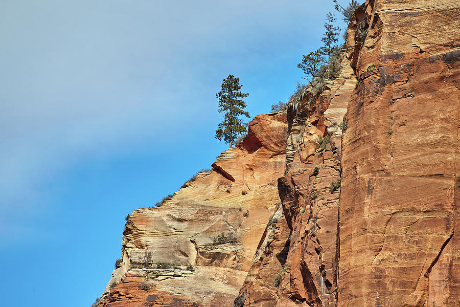Zion National Park by Steve Kaye