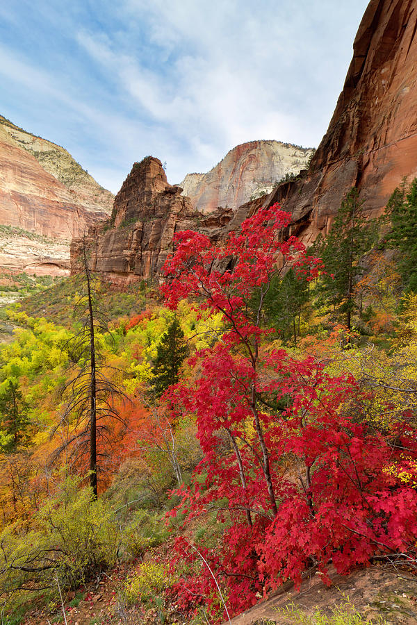 Zion National Park View Photograph by Justinreznick