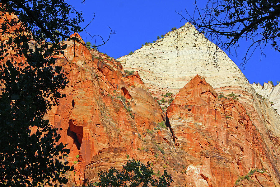 Zion Red And White Rock Mountains Trees 6315 Photograph by David Frederick