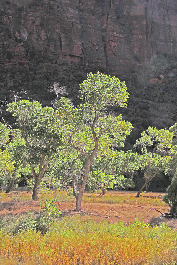 Zion trees back lit greens yellows rock wall by David Frederick