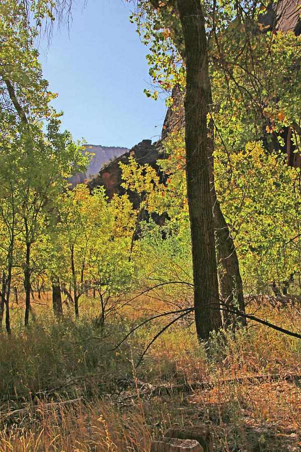 Zion trees yellow green mountains near and far blue sky 6418 Photograph by David Frederick