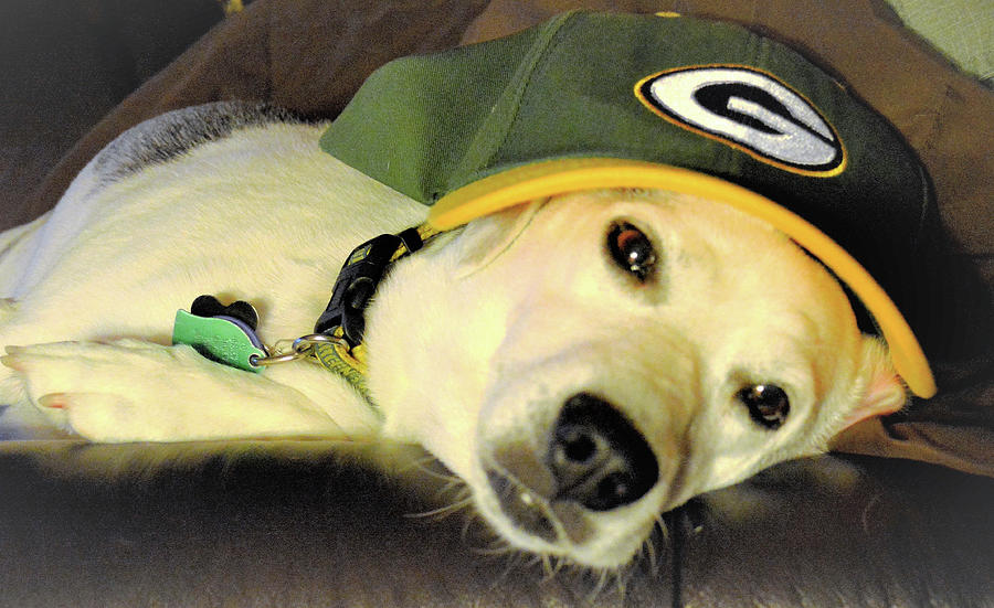 Zoey After A Packers Loss Photograph