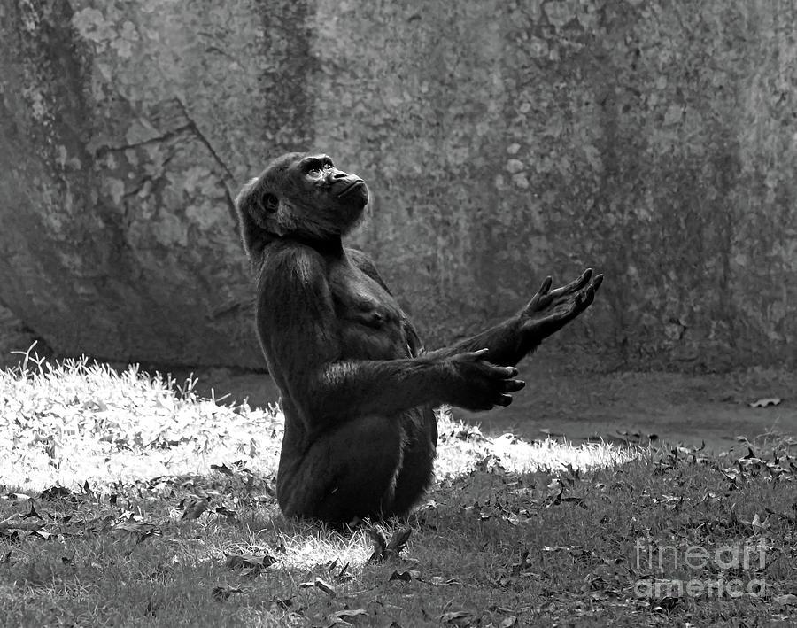 Zoo Art - Gorilla by Kerri Farley