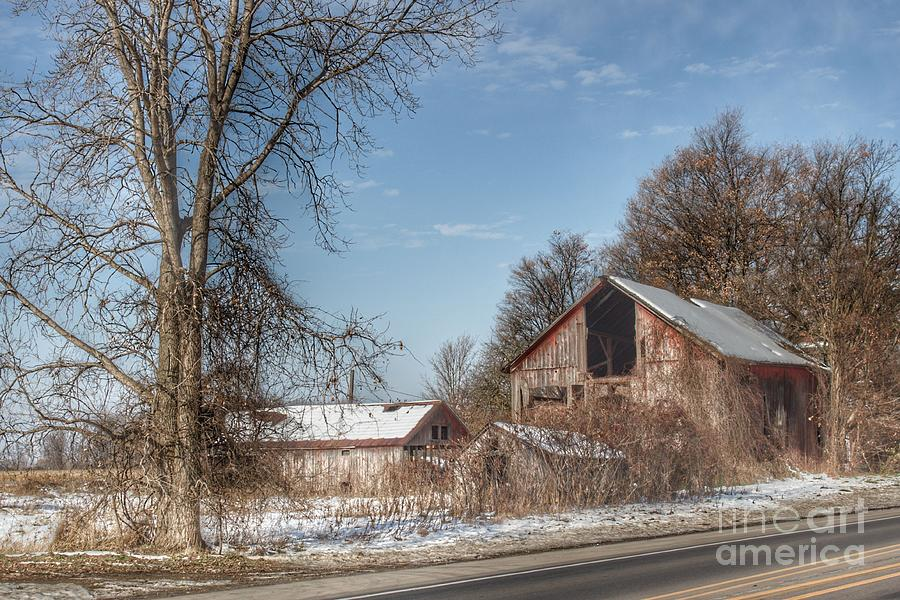 0757 - Almont's Van Dyke Red I  by Sheryl L Sutter