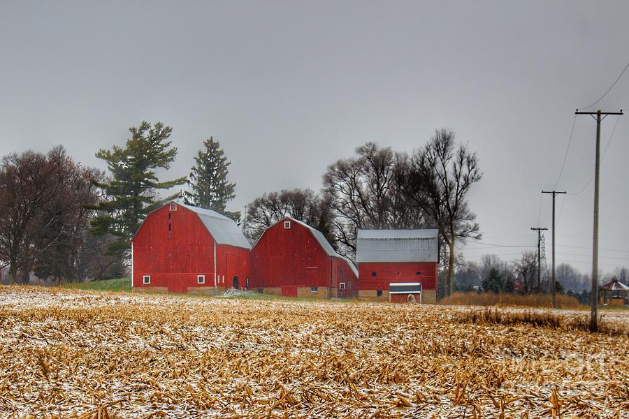 0791 - Shoemaker Road's Winter Reds II  by Sheryl L Sutter