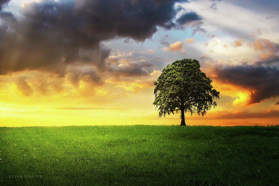 A Lone Tree Under The Cloudy Sky In The Field Photograph By Dejan Travica