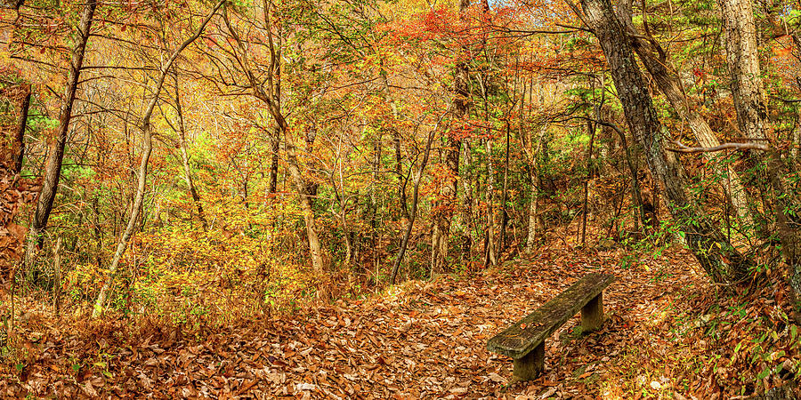 2to1 Pano A Restful Spot In The Woods Photograph