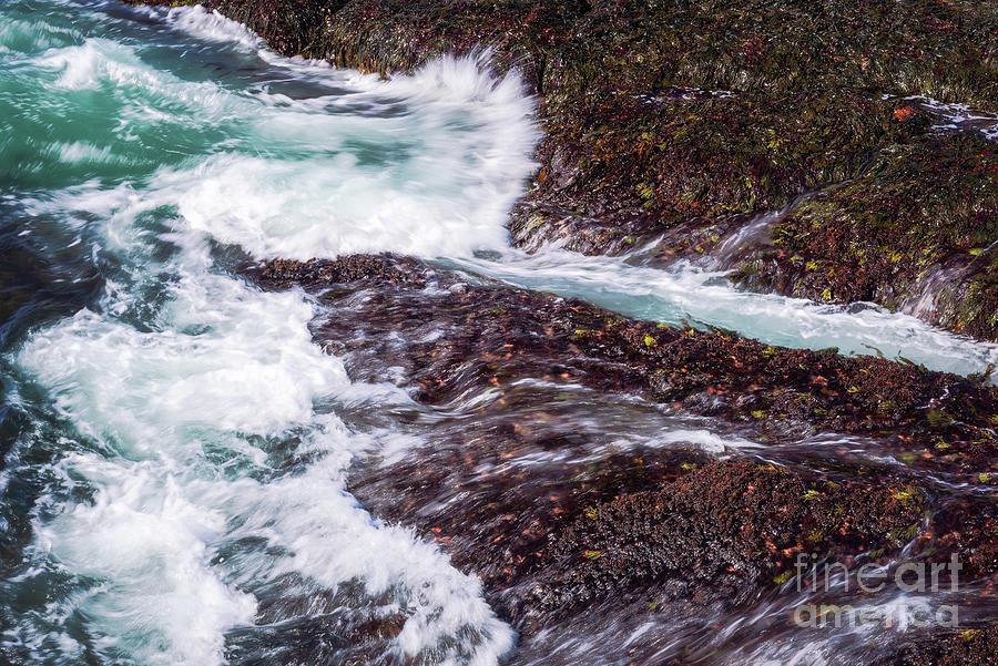 Acadia Surf by Sharon Seaward