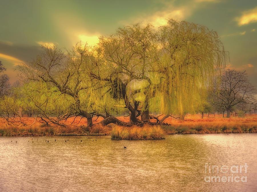 Bushy Park Photograph - Across The Water by Leigh Kemp