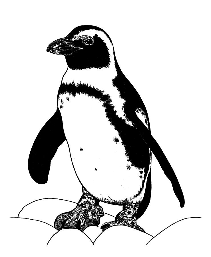 African penguin ink illustration by Loren Dowding