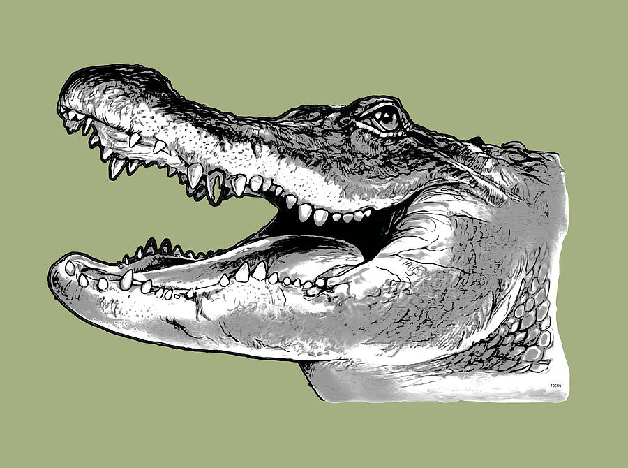American Alligator Drawing