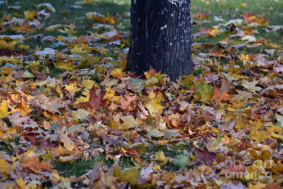 Autumn 18 Photograph