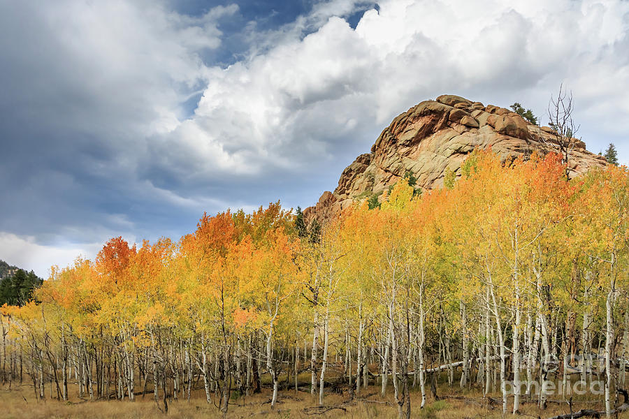 Autumn Color In The Mountains Near Lake George, Co, Usa Photograph