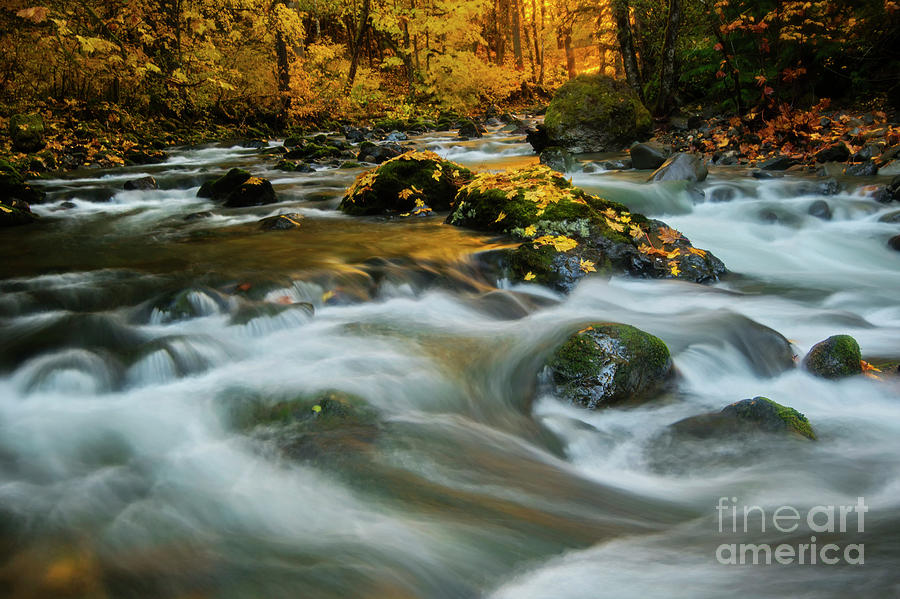 Autumn Gold by Mike Dawson