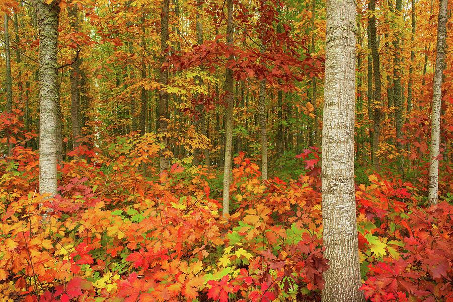 Autumn Leaves Photograph