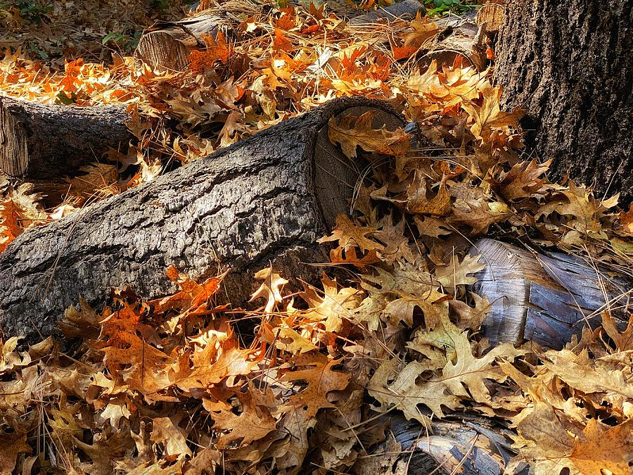 Autumn Oak by Steph Gabler
