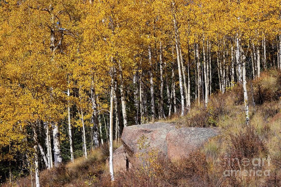 Autumn On Anne-marie Falls Trail Photograph