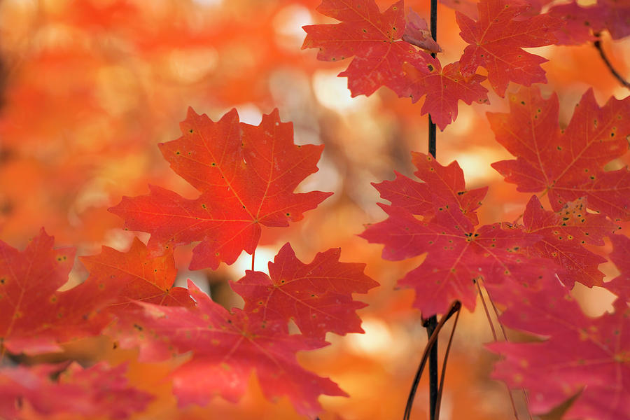 Autumn Reds by Sue Cullumber