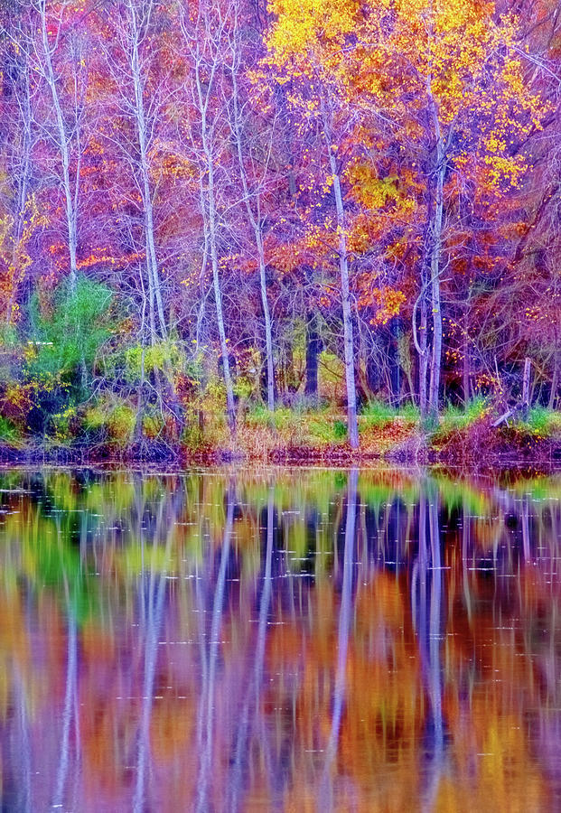 Autumn Reflection by Tom Singleton