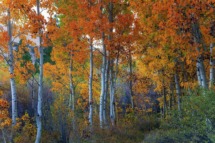 Autumn Vision Photograph by Vincent James