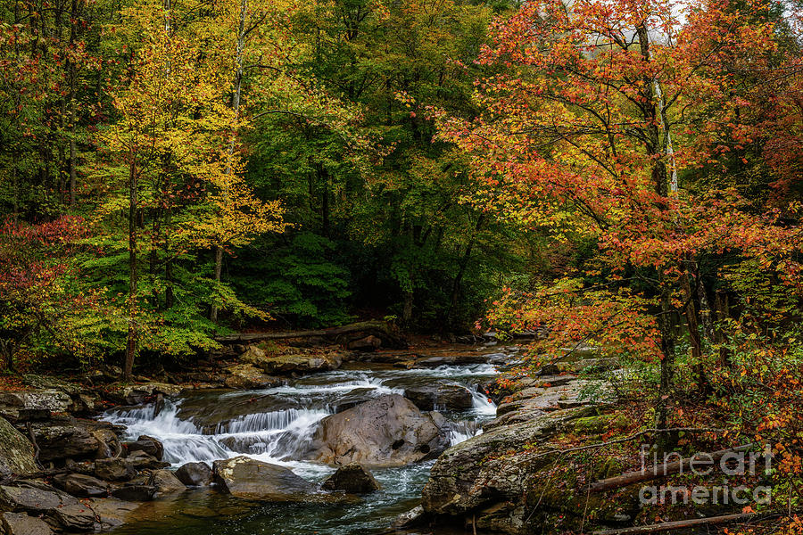 Back Fork of Elk River Waterfall by Thomas R Fletcher