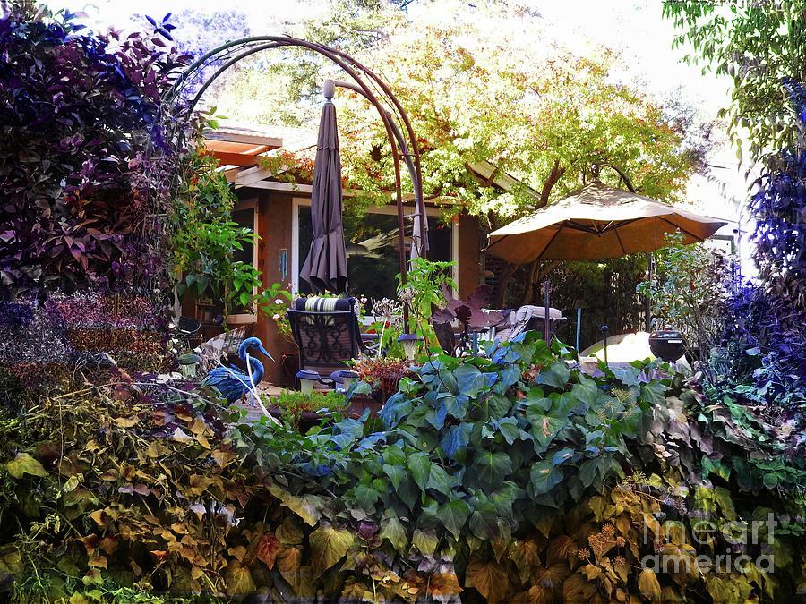 Backyards by Leslie Hunziker