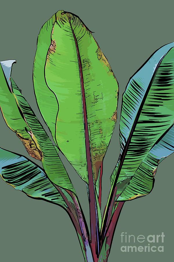 Banana Plant Digital Art - Banana Plant by Kirt Tisdale