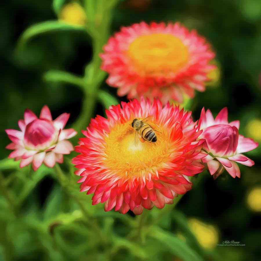 Bee Photograph - Bee Happy by Mike Braun