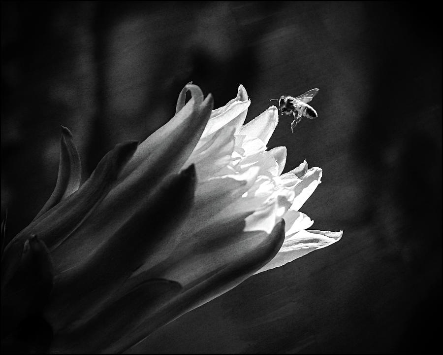 Beeeautiful Photograph