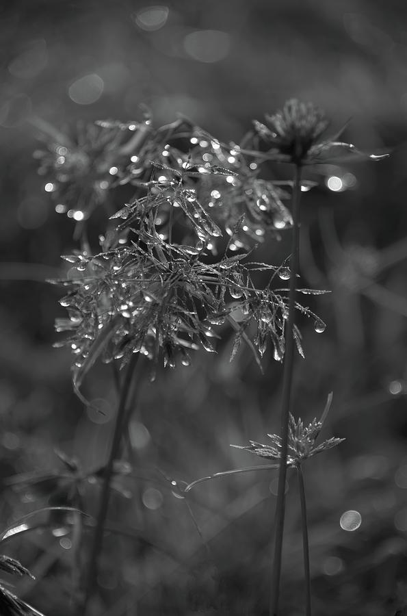 Bejeweled By Rain Photograph