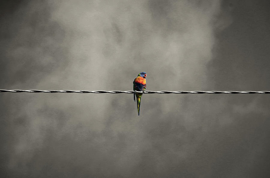 Bird Photograph - Bird on the wire by Leigh Henningham